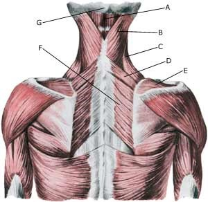 Ryg-Nakke - Muskelinfiltrationer